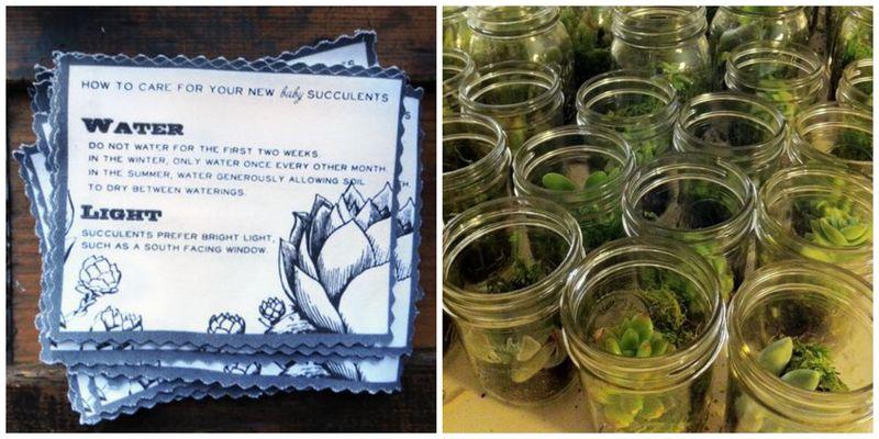 Succulent favors care sheet