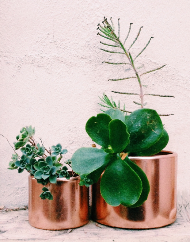 Copper planter by Justina Blakeney
