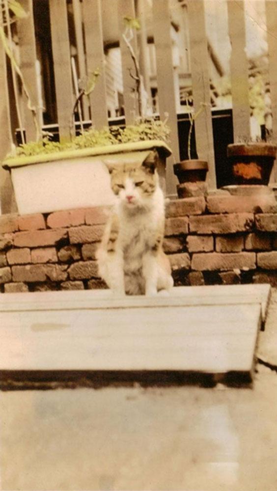 Cat_enhanced