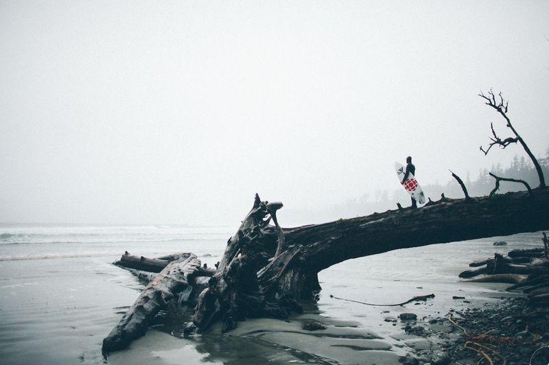 Surf tree