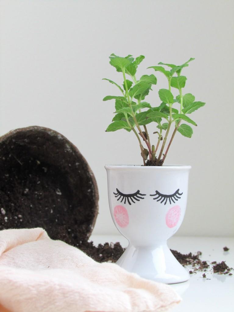Pretty Face Seedling Starters | Francois et Moi