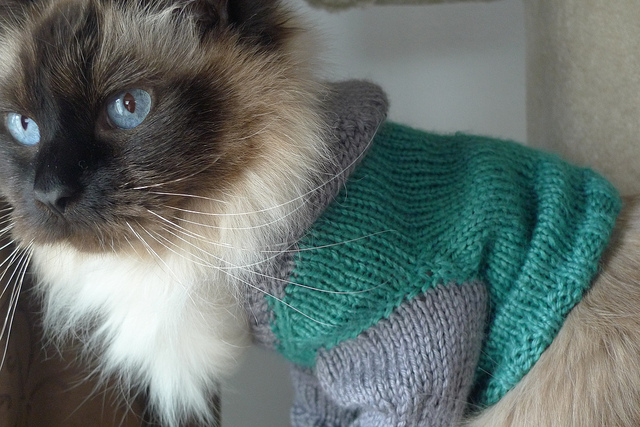 Knit up a cat hoodie