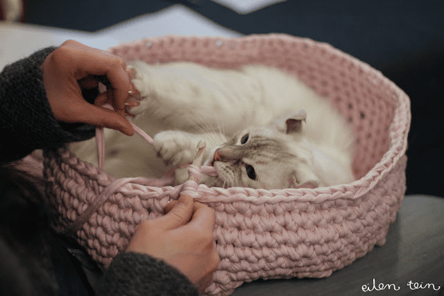 Crochet the perfect nest for your feline friend