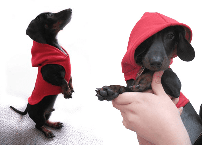 5 Cute and Kind Dog Clothing Sew Projects