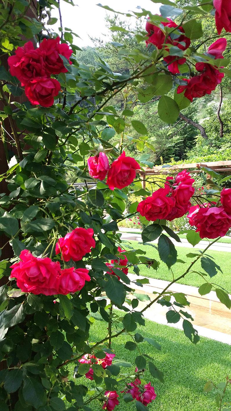 flowers in Jade Garden