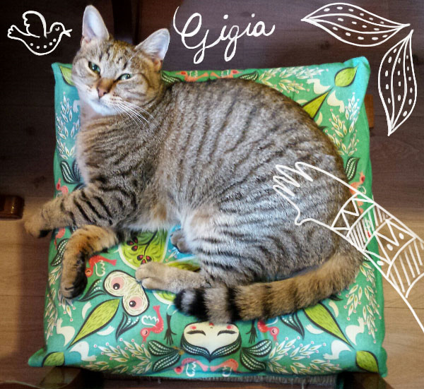 One of Gaia's feline friends