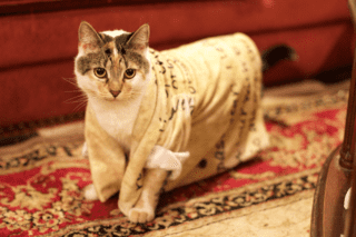 Lucy the Cat in wearable holiday newsleetter