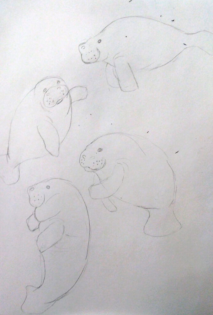 "in process sketch of Rachel's design, ""Oh The Hue-Manatee"""