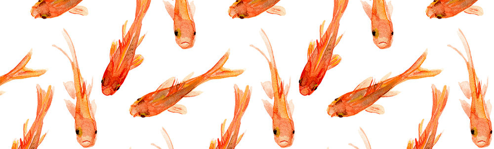 Goldfish by Jillbyers
