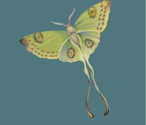 Spoonflower designer Jennifer Carrasco