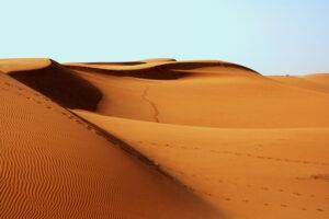 Desert Animals - Africa Bedouin Design Challenge Spoonflower and Bucketfeet