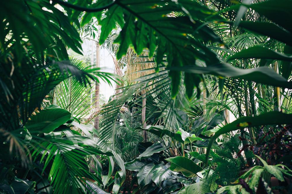 rainforest Bucketfeet / Spoonflower design challenge