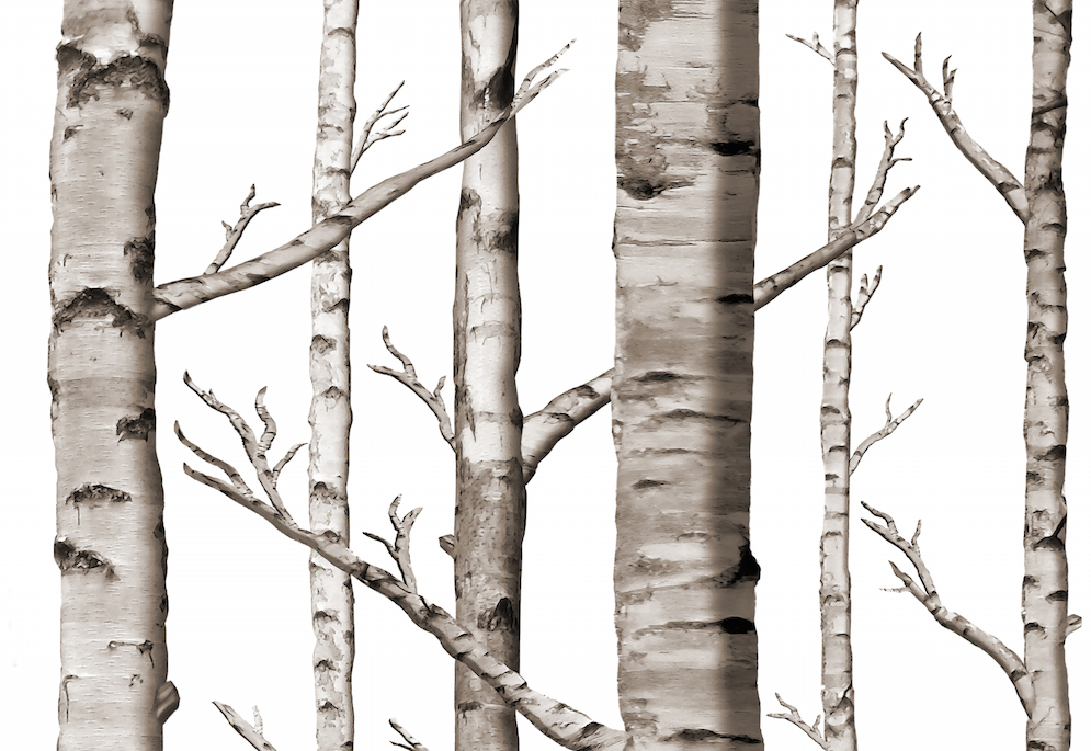 Birch Forest in Black and White by WIllowlanetextiles