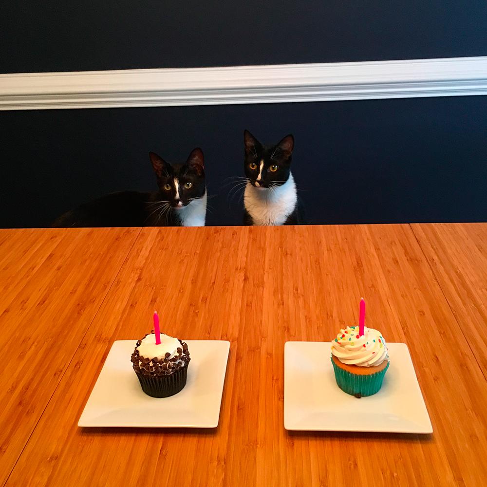 Cats enjoying cupcakes! | Spoonflower Blog