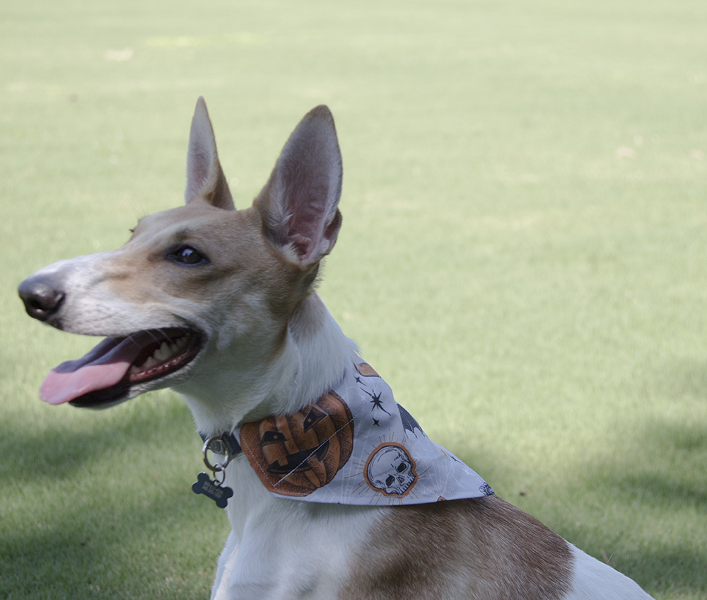 DIY Dog Bandana for Under $3 | Spoonflower Blog