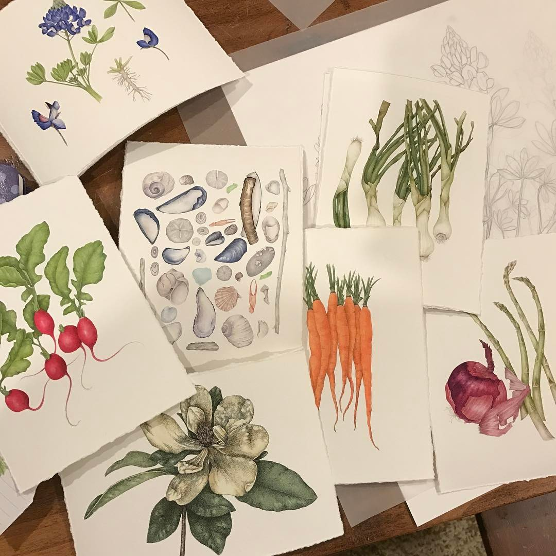 Betsy Barry's botanical drawings | Spoonflower Blog