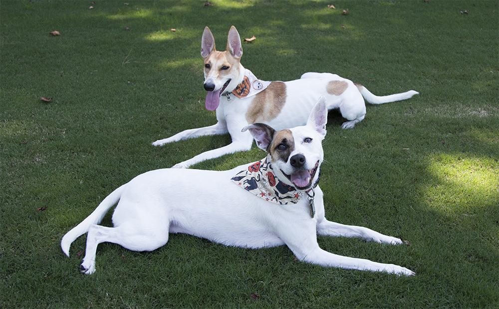 DIY dog bandanas | Spoonflower Blog