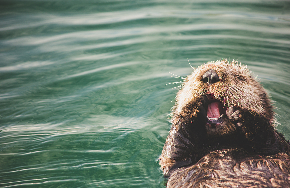 Announcing February's Design Challenge Themes: Otters | Spoonflower Blog