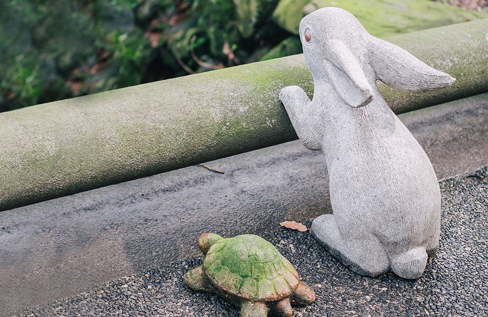 Announcing February's Design Challenge Themes: Tortoise and the Hare | Spoonflower Blog