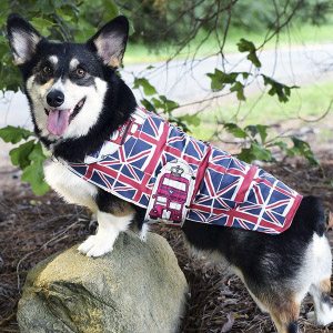 Union Jack dog jacket | Spoonflower Blog