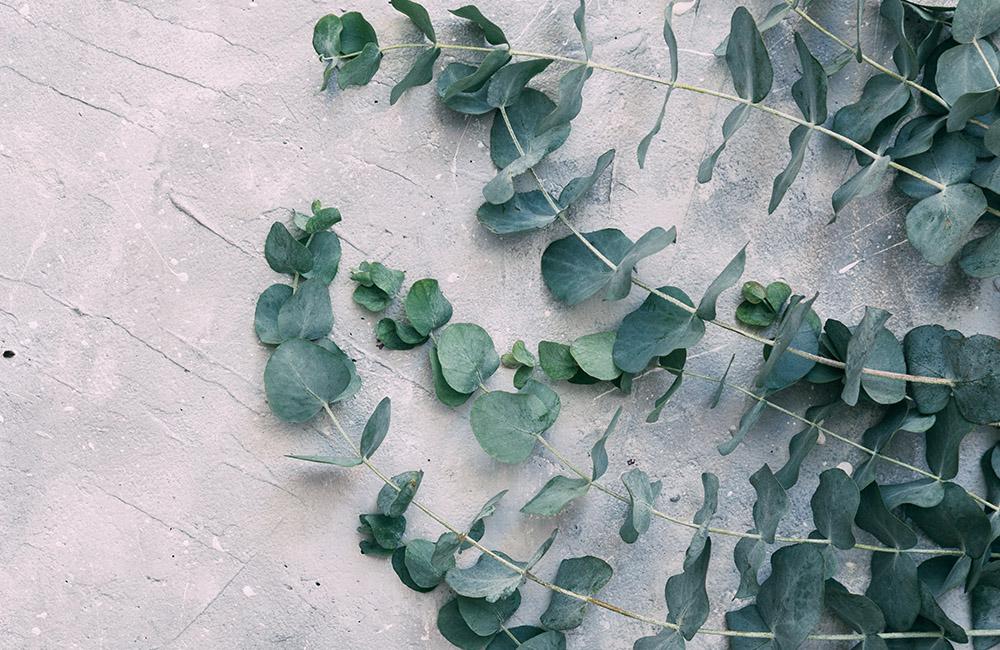Announcing April's Design Challenge Themes - Australian Flora | Spoonflower Blog