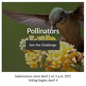 Spoonflower Design Challenge : Pollinators | Spoonflower Blog