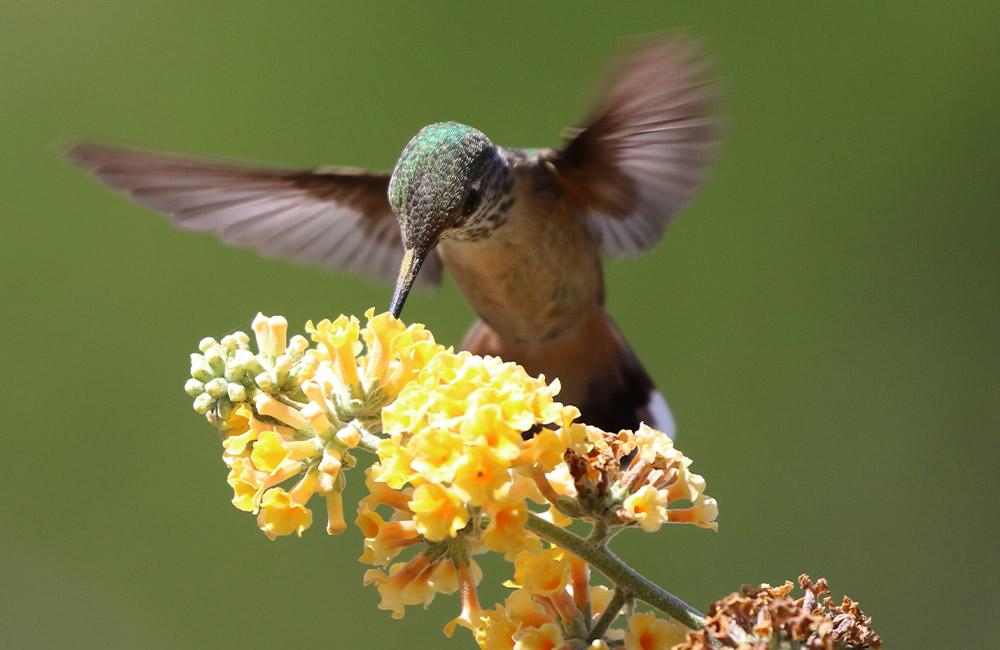 Announcing April's Design Challenge Themes - Pollinators | Spoonflower Blog