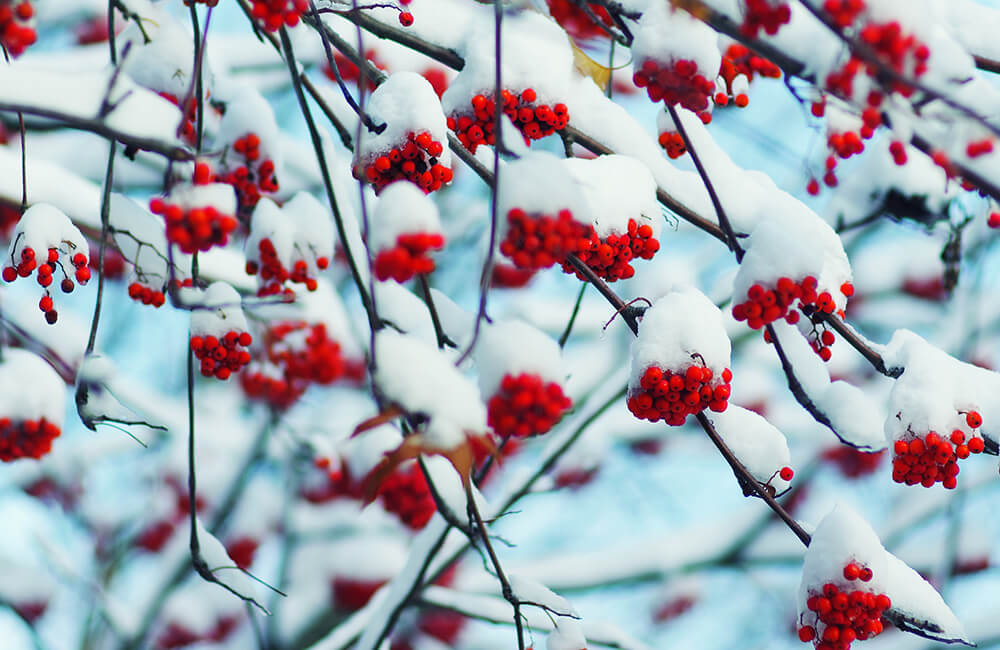Announcing September's Design Challenge Themes: Winter Flora | Spoonflower Blog