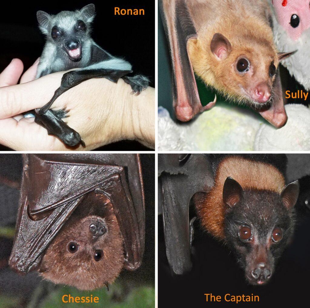 Sponsor a bat at Bat World Sanctuary | Spoonflower Blog