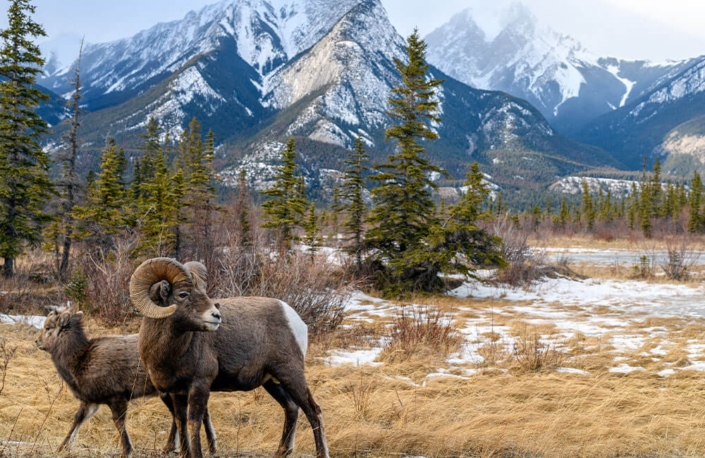 Announcing June's Design Challenge Themes: Canadian Wildlife | Spoonflower Blog