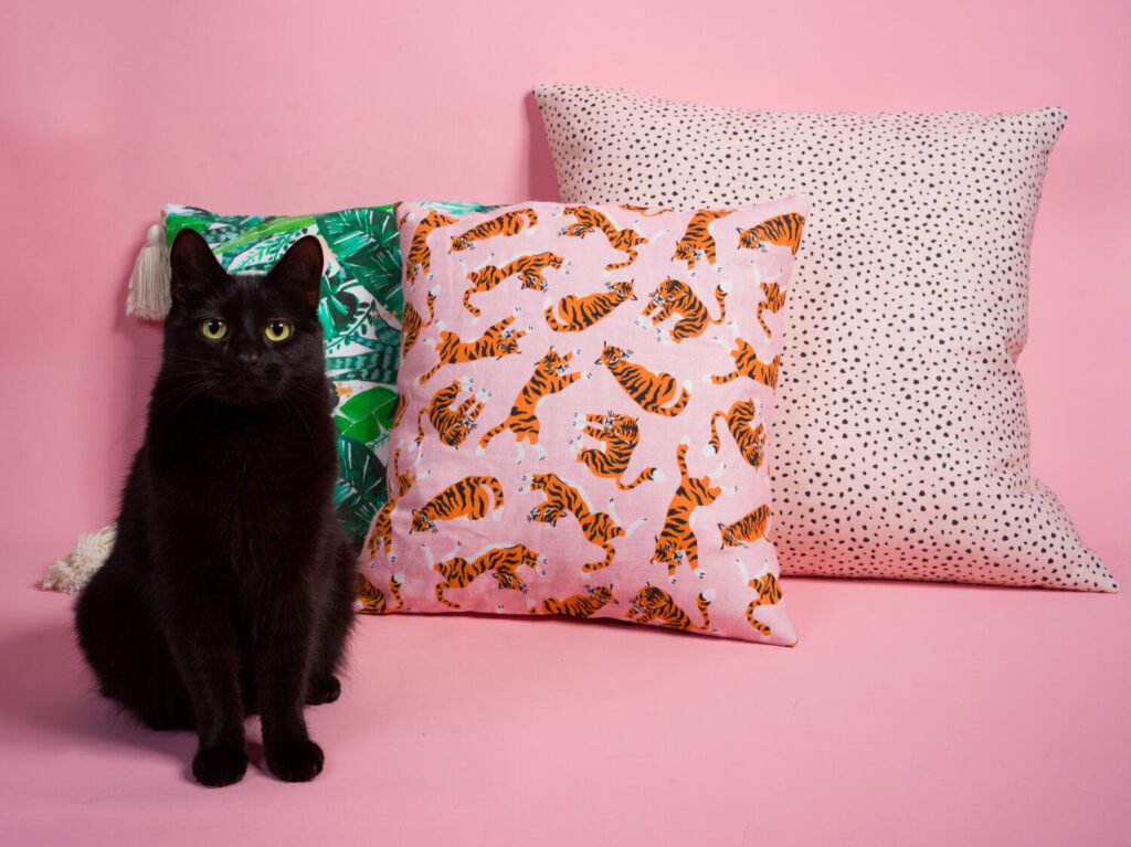 envelope pillows and a black cat