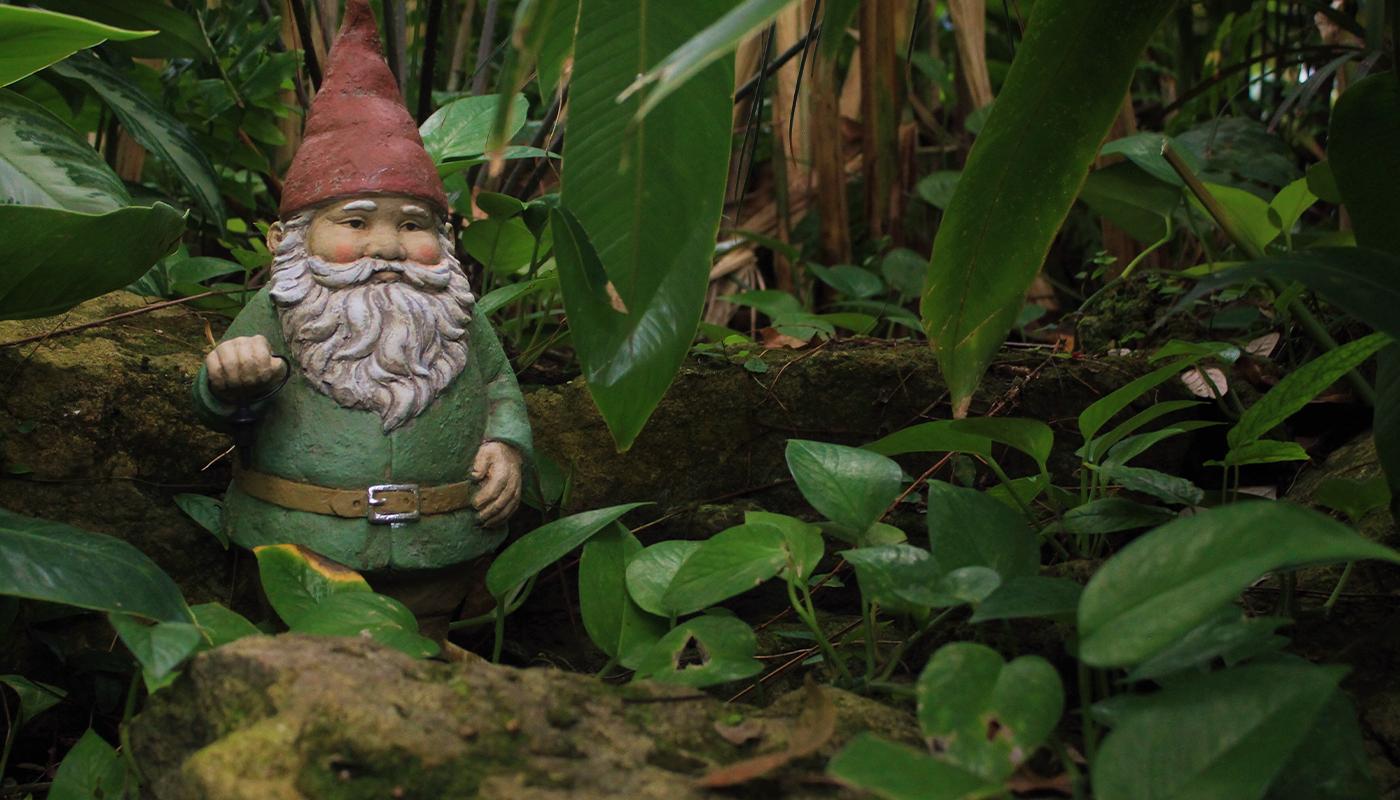 Garden gnome hiding in the bushes