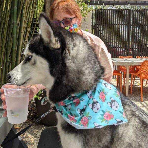 Dog wearing a no-sew dog bandana
