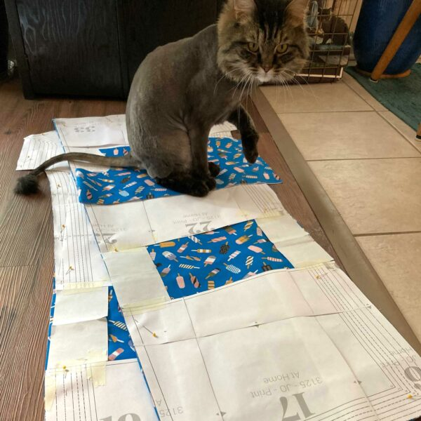 Cat sits on top of a sewing project in process