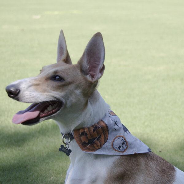 Dog wearing a handmade Halloween Dog Bandana