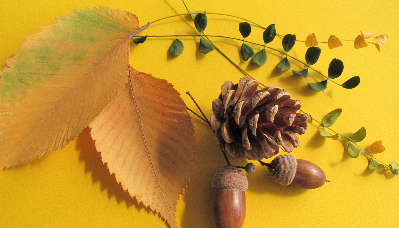 Leaves, acorns, and a pinecone on a bright yellow background
