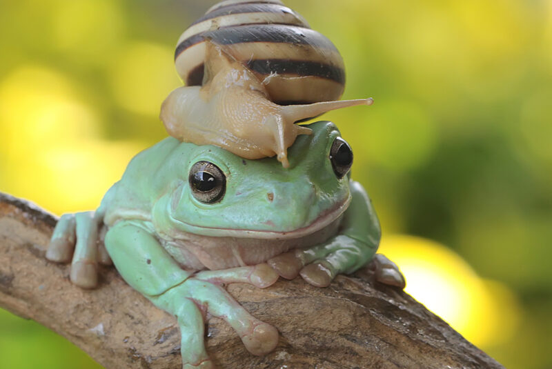 Frog with a snail on its head